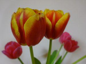 【七瀬の杜】春の気配