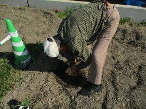 畑に苗植え~まゆ松代~