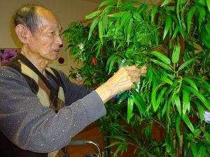 【七瀬の杜】笹の葉さらさら