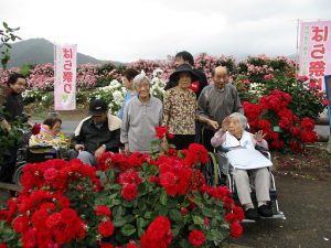 バラ祭りに行ってきました(^^)~まゆ更科~