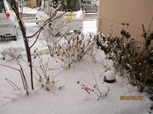 雪の季節真っ盛り(((p(>◇<)q))) サムイー!!~まゆ更科~