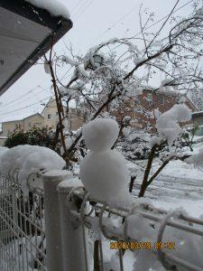 春の大雪⛄ ~まゆ更科~