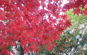 秋の気晴らし