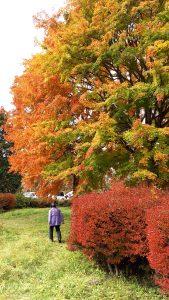 秋深まりました・・・ ~ケアセンター・ライフケア~